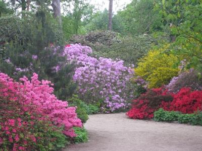 parcfloralboisvincennesplusbellesphotosprintempsparis2574501.jpg
