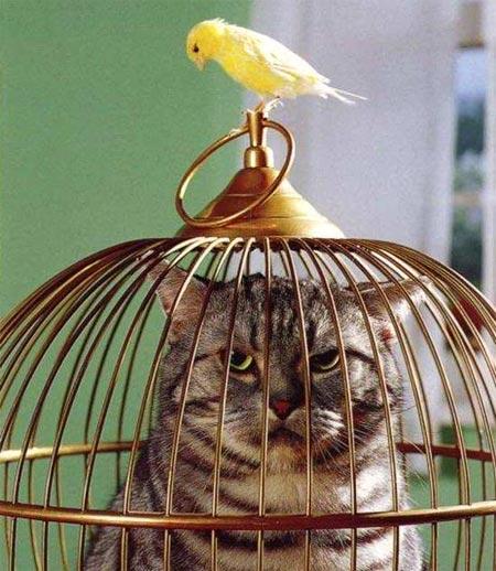 Comment protger un petit oiseau