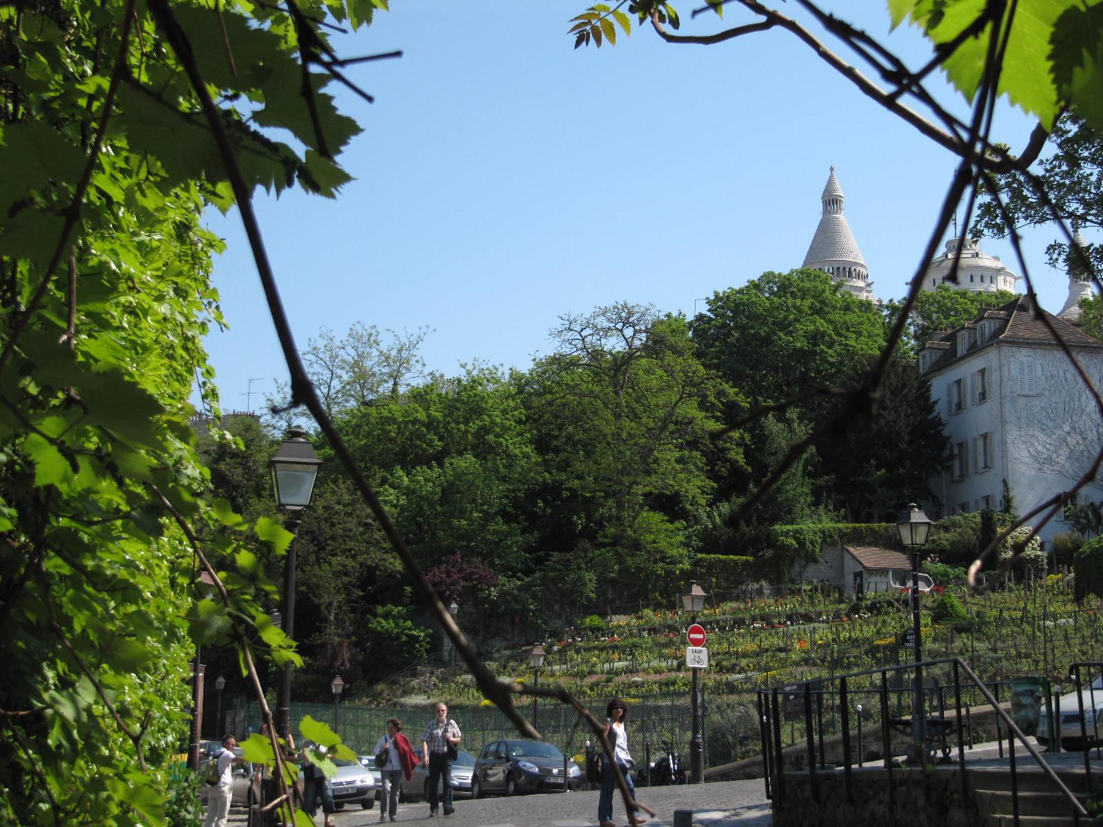 Le Jardin Sauvage Saint Vincent Paris 18e Visite Guidee Des