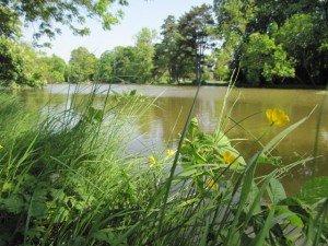 RANDONNÉE ÉCOLOGIQUE AU BOIS DE VINCENNES : diversité des milieux, plantes et animaux dans Bois de Vincennes (12e) 231160_212943005400727_8149650_n-300x225