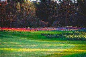 Les Jardins de Bagatelle dans Bois de Boulogne (16e) 258922_224994607528900_3202692_o-300x199