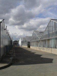 Serres du Centre de Production Horticole de la Ville de Paris, à Rungis dans SORTIES 268639_235950003100027_1410942_n-225x300