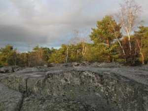 LE MASSIF FORESTIER DE FONTAINEBLEAU dans SEINE-ET-MARNE (77) 403066_376735119021514_257546393_n-300x225