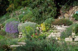 LE JARDIN ALPIN DU JARDIN DES PLANTES DE PARIS dans 05e arr. jardin-alpin-2011-04-1-300x198