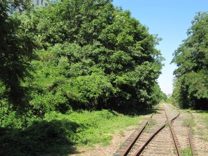 Petite Ceinture 15e arr (photo Paul-Robert TAKACS)