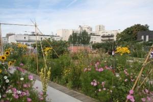 Jardin sur le toit du Gymnase, rue des Haies, Paris 20e (D.R.)